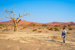 Tourist walking in the majestic Namib desert, Sossusvlei, Namib Naukluft National Park, main visitor attraction and travel destina. Tion in Namibia. Adventures Stock Photography
