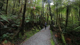 Tourist walking in natural trail of lake matheson most popular traveling destination in south island new zealand stock video footage