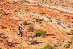Tourist walking on red cliffs in Valley of the Fire national par Stock Photography