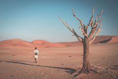 Tourist walking on the scenic desert at Sossusvlei, Namib Naukluft National Park, Namibia. Braided Acacia tree and red sand dunes. Toned image, vintage style Royalty Free Stock Photos