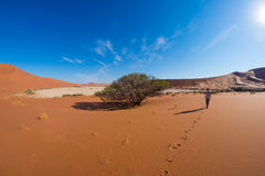 Tourist walking on the scenic dunes of Sossusvlei, Namib desert, Namib Naukluft National Park, Namibia. Adventure and exploration Royalty Free Stock Images