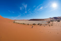 Tourist walking on the scenic dunes of Sossusvlei, Namib desert, Namib Naukluft National Park, Namibia. Adventure and exploration. In Africa Stock Photos