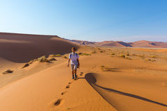 Tourist walking on the scenic dunes of Sossusvlei, Namib desert, Namib Naukluft National Park, Namibia. Afternoon light. Adventure. And exploration in Africa Royalty Free Stock Image