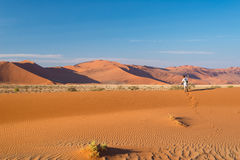 Tourist walking on the scenic dunes of Sossusvlei, Namib desert, Namib Naukluft National Park, Namibia. Afternoon light. Adventure. And exploration in Africa Stock Image