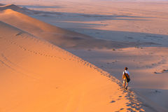 Tourist walking on the scenic dunes of Sossusvlei, Namib desert, Namib Naukluft National Park, Namibia. Afternoon light. Adventure. And exploration in Africa Royalty Free Stock Photos