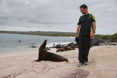 Tourist walking by a seal. In the Galapagos islands Stock Image