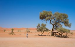 Tourist walking at Sossusvlei, Namibia. Scenic Acacia trees and majestic sand dunes, Namib desert, Namib Naukluft National Park, t. Ravel adventure in Africa Royalty Free Stock Image