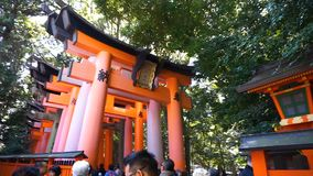 The tourist walks through torii gates at  Fushimi Inari Shrine temple stock video