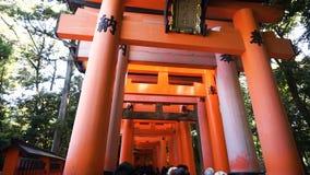 The tourist walks through torii gates at Fushimi Inari Shrine temple stock footage