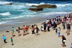 Tourist watch seals Stock Photos
