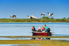 Tourist watching the Pelican Birds wildlife fauna in the Danube. Delta Royalty Free Stock Photography