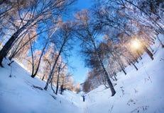 Tourist in winter birchwood. Small tourist in Birchwood at mountains of Kazakhstan Stock Photos