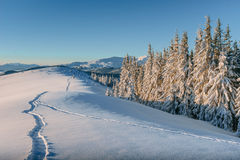 Tourist is in winter mountains. Carpathians, Ukraine, Europe Stock Photography
