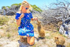 Free Tourist With Quokka Royalty Free Stock Image - 108104426