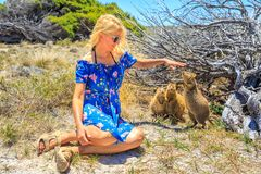Free Tourist With Three Quokka Stock Images - 108104524