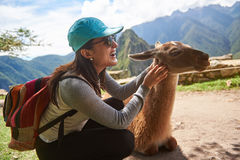 Tourist woman play with lama. In Machu Picchu. Smiling girl touch lama animal Royalty Free Stock Image