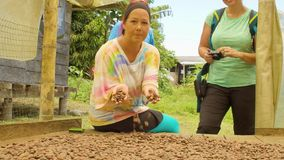 Tourist Woman Smelling Cocoa Beans. Tourist Woman Smelling The Aroma Of Cocoa Beans In Ecuador stock video footage