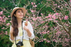 Tourist woman watching cherry blossom flowers. Beautiful smiling tourist women watching cherry blossom flowers at famous sakura trees park and enjoying spring Stock Image