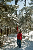 Tourist at Yumthang Valley. A tourist is shaking the leaves of the snow filled deodar, pine, oak forest to experience snow fall at Yumthang Valley in Sikkim Royalty Free Stock Photo