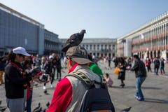 Touriste à Venise avec le pigeon Photos stock