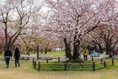 Touriste au parc de château de Hirosaki Photographie stock