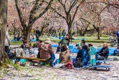 Touriste au parc de château de Hirosaki Image libre de droits