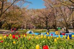 Touriste au parc de château de Hirosaki images libres de droits