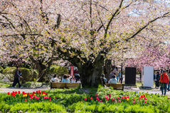 Touriste au parc de château de Hirosaki Photos libres de droits