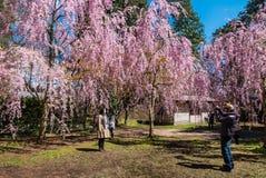 Touriste au parc de château de Hirosaki Image stock