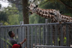 Touriste au zoo de Taiping Photographie stock