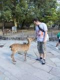 Touriste choyant un cerf commun de sika à Nara Image libre de droits