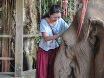 Touriste féminin heureux jouant avec l'éléphant Photos stock