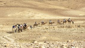Touristen auf einem Kamel-Fahrausflug der Judaean-Wüste lizenzfreies stockbild