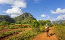 Touristen auf einem Pferdeausflug in Nationalpark Vinales, UNESCO, Pinar del Rio Province, Kuba stockfotografie