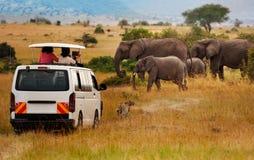 Touristen auf Spiel fahren das Machen des Fotos der Elefanten stockfotografie