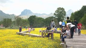 Touristen besuchen das schöne Kosmosfeld und -nehmen stock video