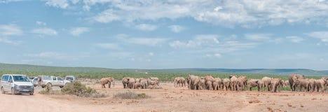 Touristen in den Fahrzeugen, die eine große Herde von Elefanten ansehen Lizenzfreie Stockfotografie