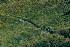 Touristen, die über die blühende Wiese gehen Stockbild