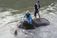 Touristen, die auf Elefanten im Fluss Kwai baden Stockfotografie