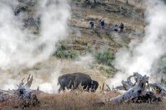 Touristen, die Büffel im Dampf ansehen Stockfotos