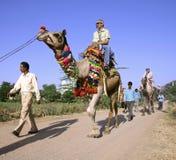 Touristen, die eine Kamelfahrt nehmen Lizenzfreie Stockfotografie