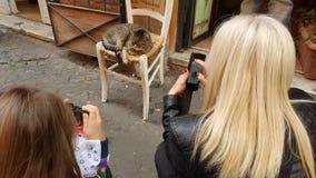 Touristen, die eine Katze fotografieren Stockfotografie