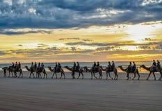 Touristen, die Kamele reiten Lizenzfreie Stockfotografie