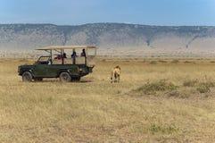 Touristen, die Löwen überwachen Stockfotografie