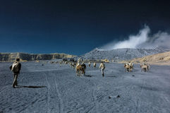 Touristen, die Spaß an Bromo-Berg haben stockfoto