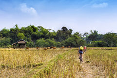 Touristen, die in Vang Vieng, Laos radfahren Stockfotografie