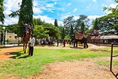 Touristen fahren auf einen Elefanten und ein Kamel an einem sonnigen Tag mysore Karnataka Indien Lizenzfreies Stockfoto