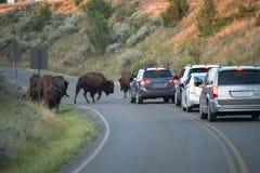 Touristen, Ferien, Büffel, Reise stockfotos