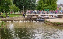 Touristen im Boot umgeben durch Schwäne, Stratford nach Avon, William Shakespeare-` s Stadt, West Midlands, England lizenzfreies stockfoto