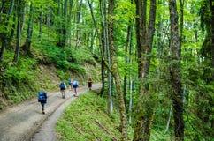 Touristen im Gebirgswald Lizenzfreie Stockfotos
